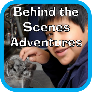 behind the scense
