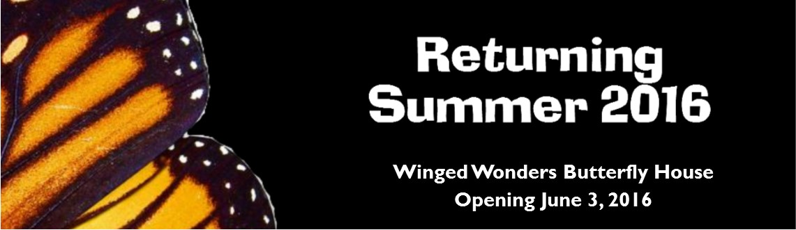 Winged Wonders Returning 2016