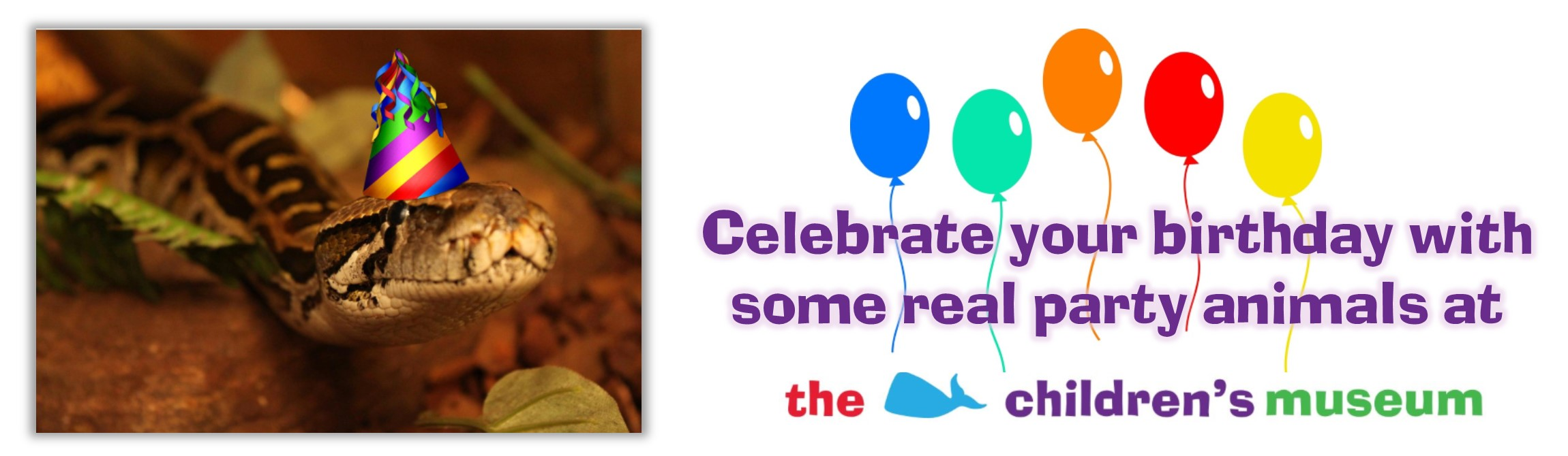 Birthday Party Web Banner