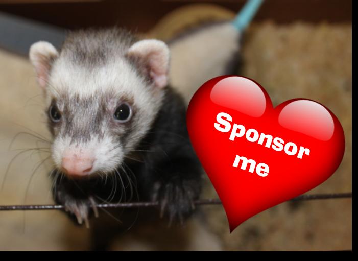 sponsor me valentines