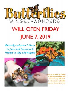 The Butterflies are Back! @ The Children's Museum